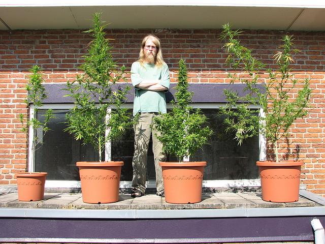 Wietplantage in miniatuur. Bron: Flickr, THCGanja