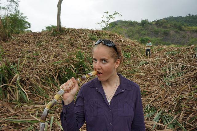 Kauwen op suikerriet. Bron: phyxiusone, Flickr